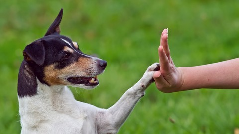 Animal Communication For beginners