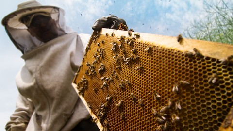 Background to Beekeeping: Start with Why!