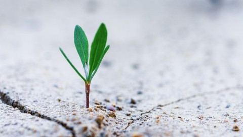 6 Traits of Executive You: Resilience