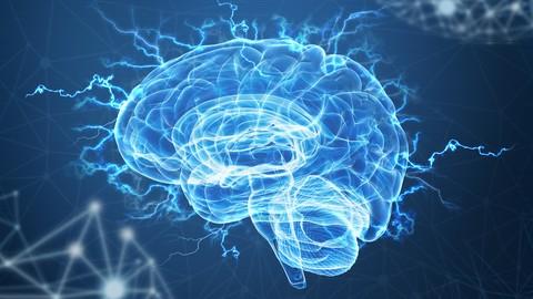 Brain, Memory & Exams
