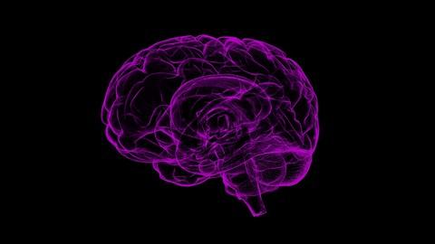 Cognitive Psychology - Learning The Human Behavior