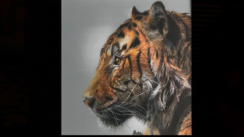 Tiger in colored pencils on drafting film