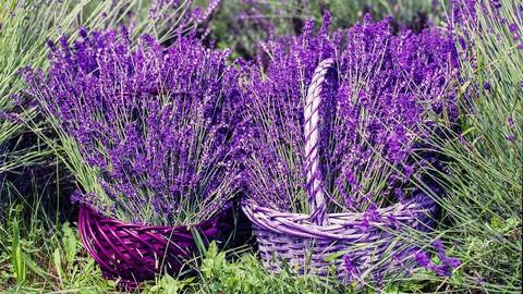 AROMATHERAPY: Guide To Essential Oils & Aromatherapy