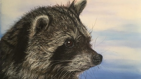 Raccoon, neocolor 2 and colored pencils on sanded paper
