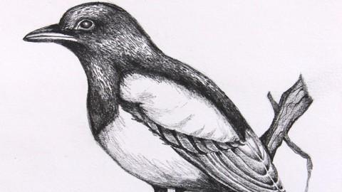 Improve your drawing skills/basic skills