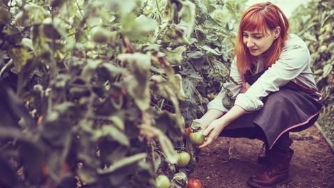 Start a Bio-organic garden and Grow Fresh Vegetables at Home
