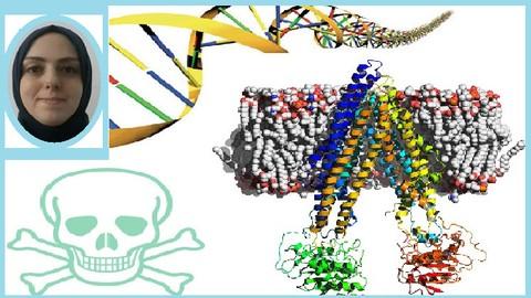 Biology, Translational Pharmacology & Toxicology Computation