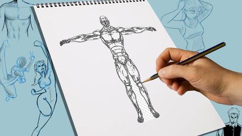 How to draw ANATOMY