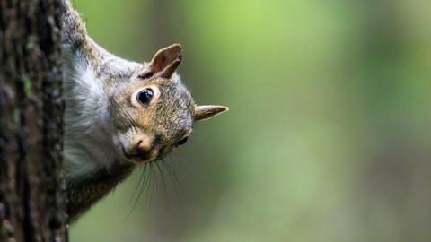 Squirrel Hunting 101