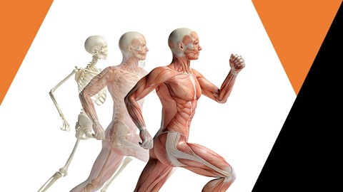 Sistema Genital Feminino - Anatomia Humana