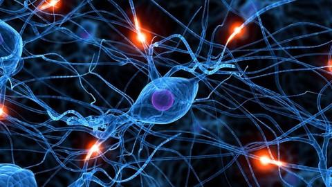 Principios de Neurociencias