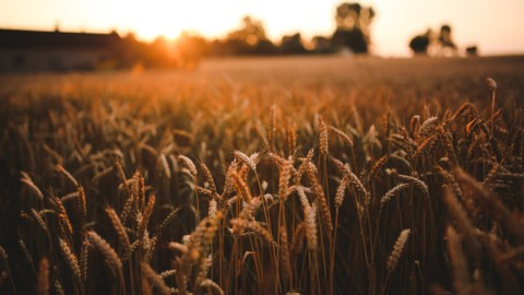 The Book of Ruth: Deep-diging Bible Study