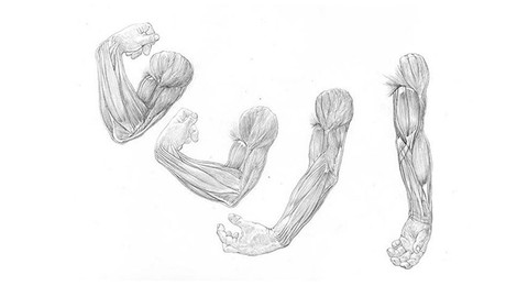 How to draw arms and legs
