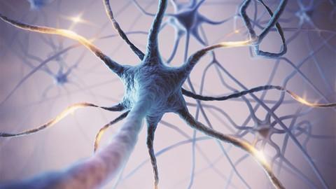 Neuroplasticity:  Neuroplasticity certification diploma