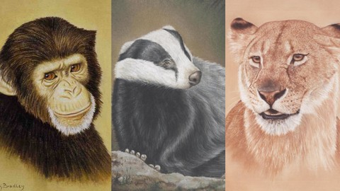 How To Draw Wild Animals for Beginners - Only 11 Pencils!