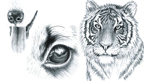 How to Draw Animal Portraits for Beginners