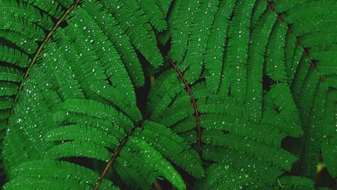 Crop Improvement and Environmental Protection MCQ (Bio Tech)