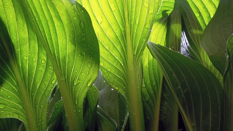 Cloning Vectors and Plant Biotechnology MCQ (Bio Tech)