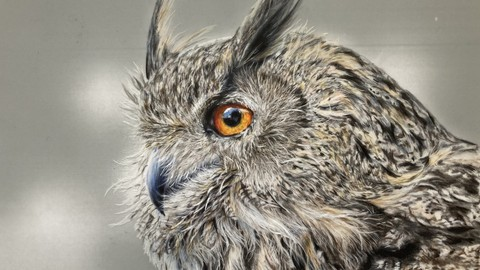 Owl in colored pencils on drafting film