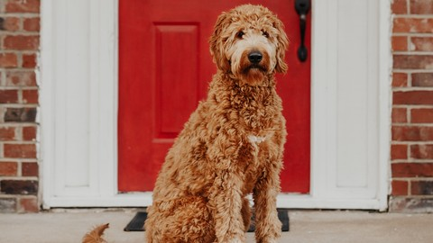 Learn to build dog breed image classifier mobile app