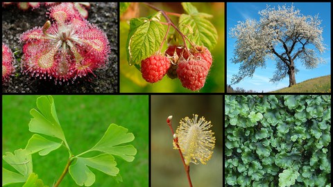 General Science - Diversity and Biology of Plants