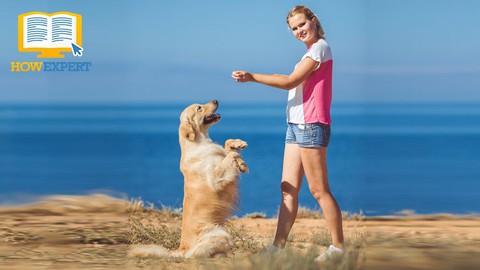 Labrador Retriever Dog Raising & Training