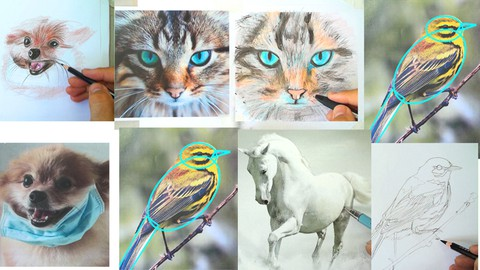 How Color Pencil Drawing