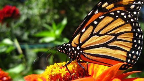 Monarch Butterfly 101