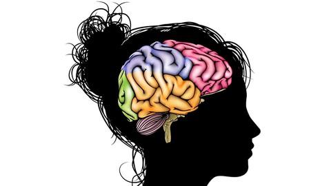 Neurociência para Ensinar Melhor