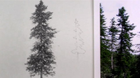 Landscape Drawing, How to Draw Pine Trees