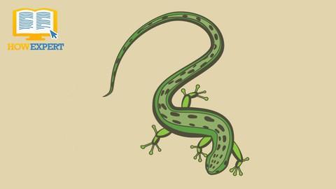 Salamander 101