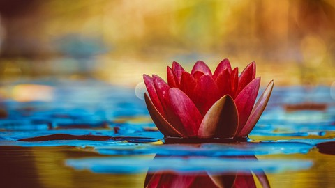 'The Art of Balance' - Foundations of Ayurveda