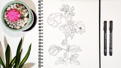 Botanical Line Drawing Illustration - Firts Steps