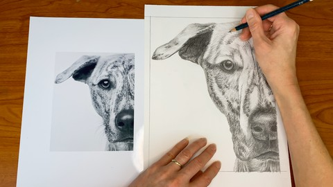 Graphite Pencil Drawing for the Advanced Beginner