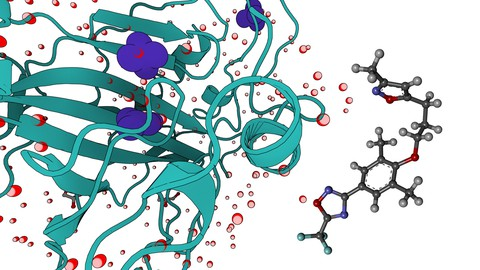 Molecular Dynamic Simulations for Drug Discovery