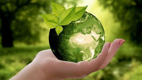 Crea un negocio sustentable cuidando el medio ambiente