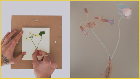 Fotografia experimental sin cámara El Lumenprint