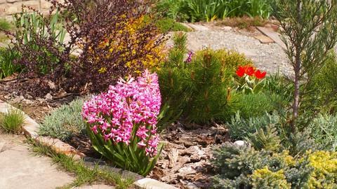 Gardening basics for beginners