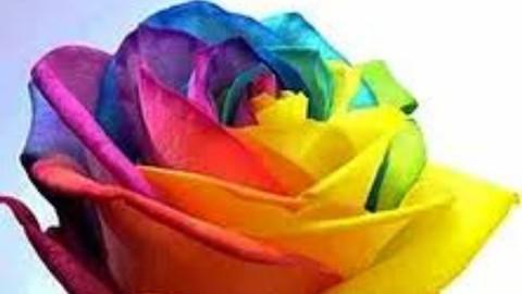 Flores  Arco-Íris de Metraton
