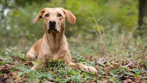 Hundefotografie für EinsteigerInnen