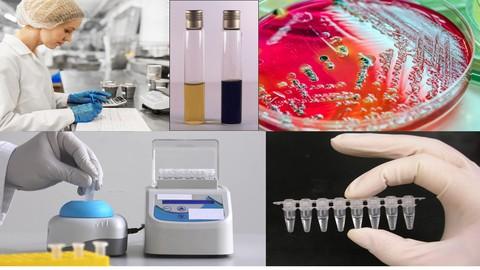 Microrganismos Indicadores e Patogênicos em Alimentos