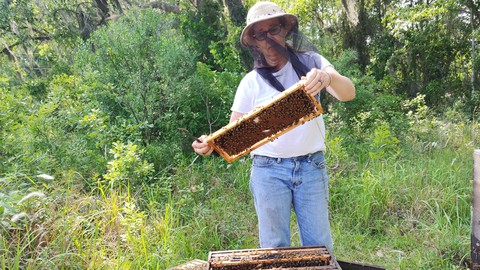How & Why to Inspect Your Hive