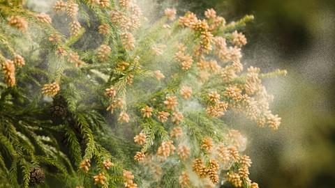 【毎年やってくる春が億劫なあなたへ】今年こそ花粉症を克服する方法