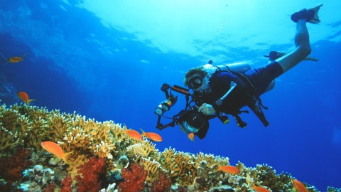 Underwater Photography: See it to believe it