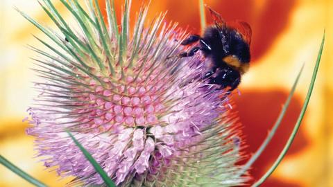 Vegetative & Reproductive Morphology of Plants