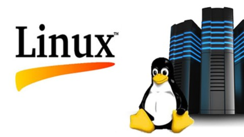 Linux Mastery | Bash scripting | تعلم لينكس من الصفر