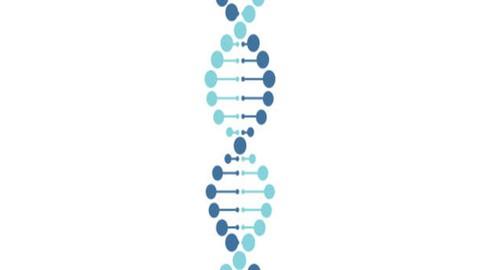 Genetics For Dummies: Learn The Basics