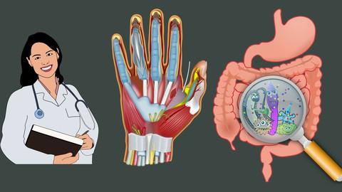 Human Anatomy - Bachelor of Medicine (for MBBS, BDS, BHMS )
