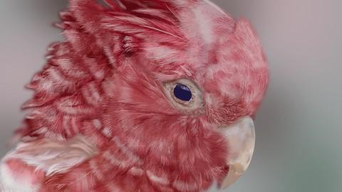 Procreate tutorial, a realistic bird (digital ipad drawing)