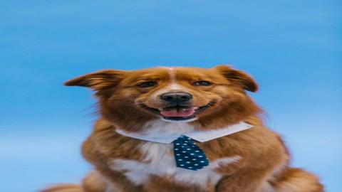 Master Dog Care